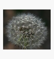 Make a wish as you blow...... Photographic Print