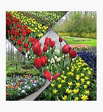 Tulips and Hyacinths - Keukenhof Collage Photographic Print