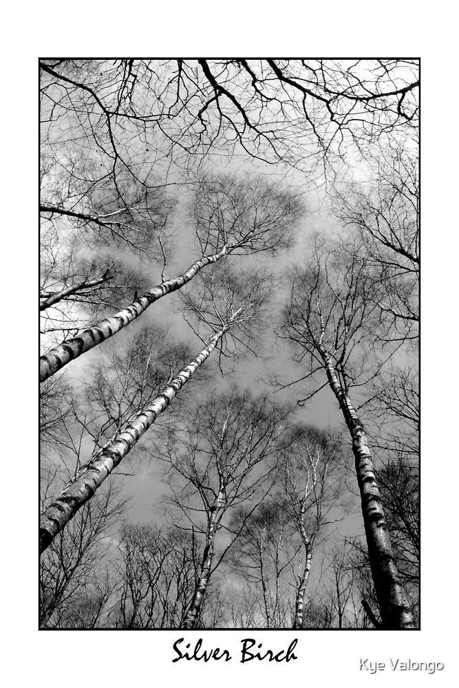 Silver Birch by Kye Valongo