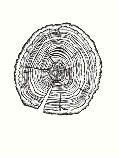 Tree Rings Art Print By Timcheesebrow Redbubble