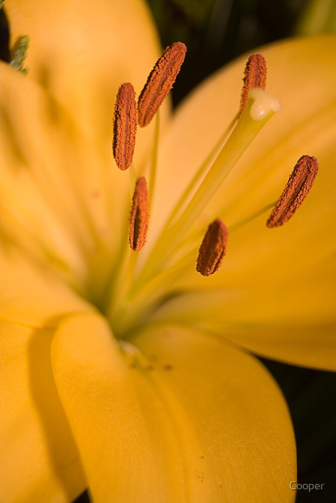 Flower stamen in close up by Cooper