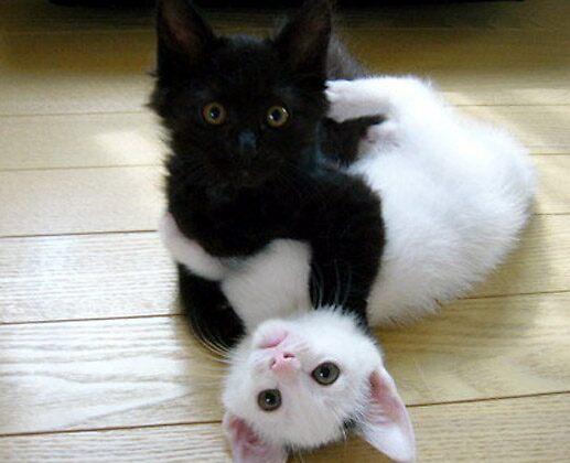 Playful Kittens by SassySarah69