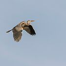 Great Blue Heron 2015-15 by Thomas Young
