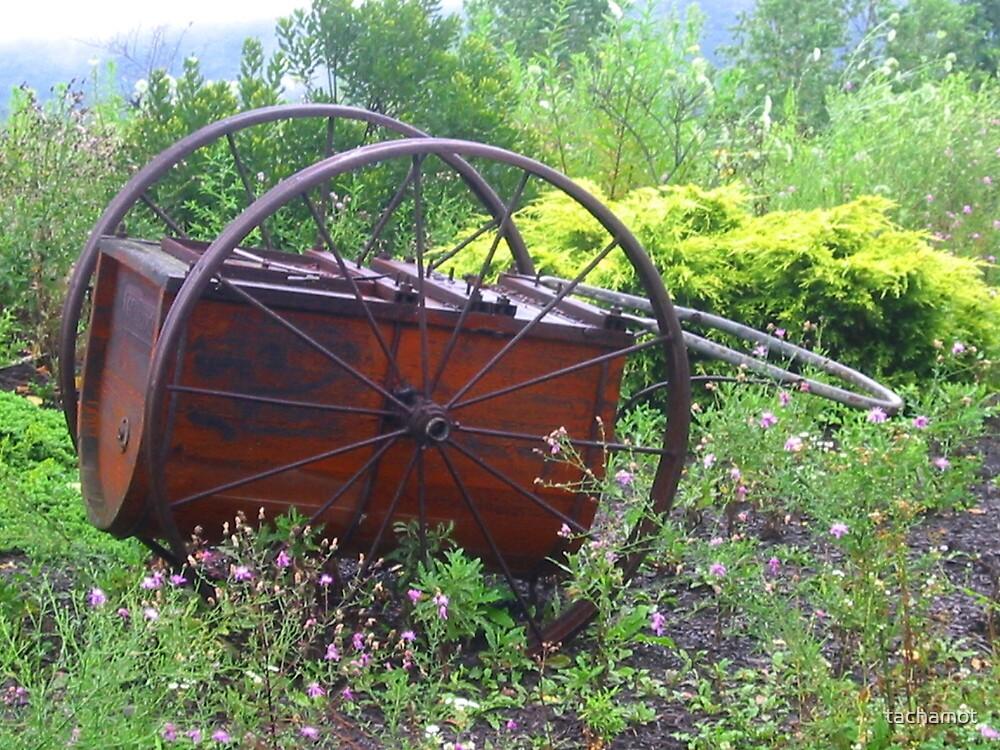 Wild Cart by tachamot