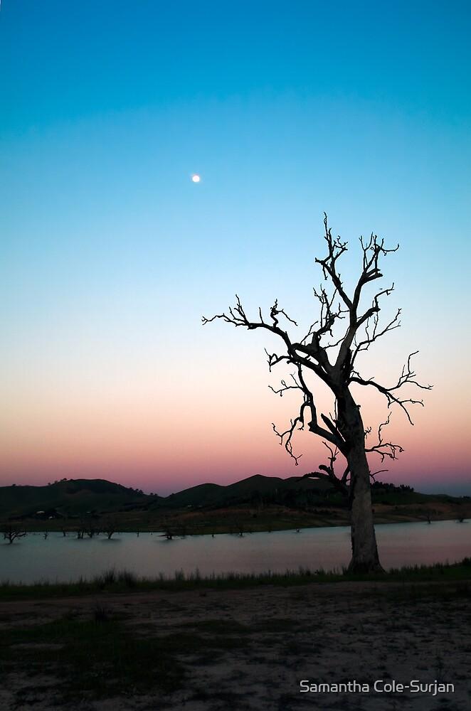 Lone Tree by Samantha Cole-Surjan