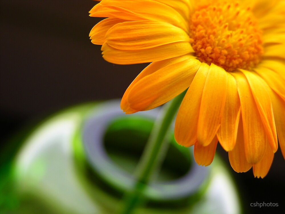 Flower in Vase II by cshphotos