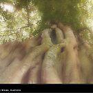 Giant Fig by Katrina Price