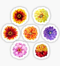 Watercolor zinnia set Sticker