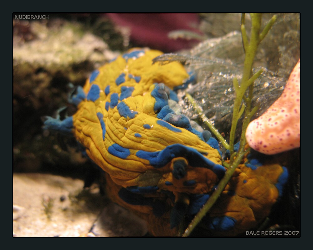 Nudibranch by Photo Rangers