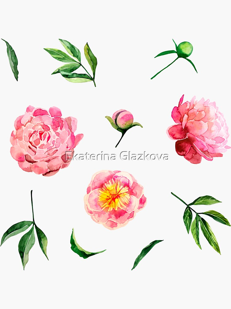 Watercolor peonies collection by Glazkova