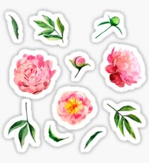 Watercolor peonies collection Sticker