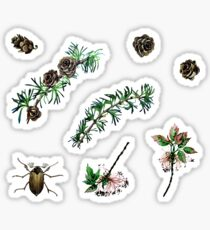 Watercolor forest set Sticker