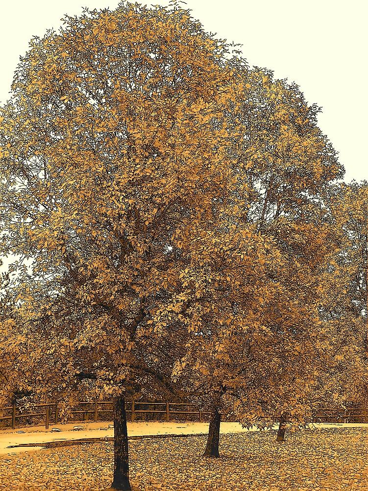 Fall Trees by Gene Cyr