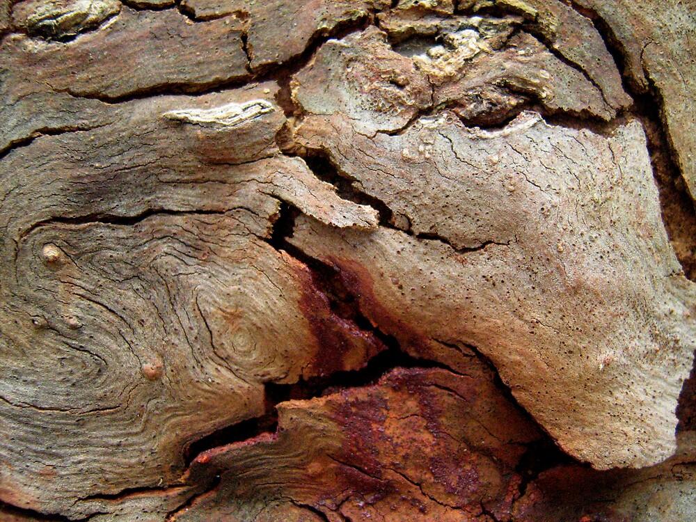Gum Tree Bark by Patricia  Knowles