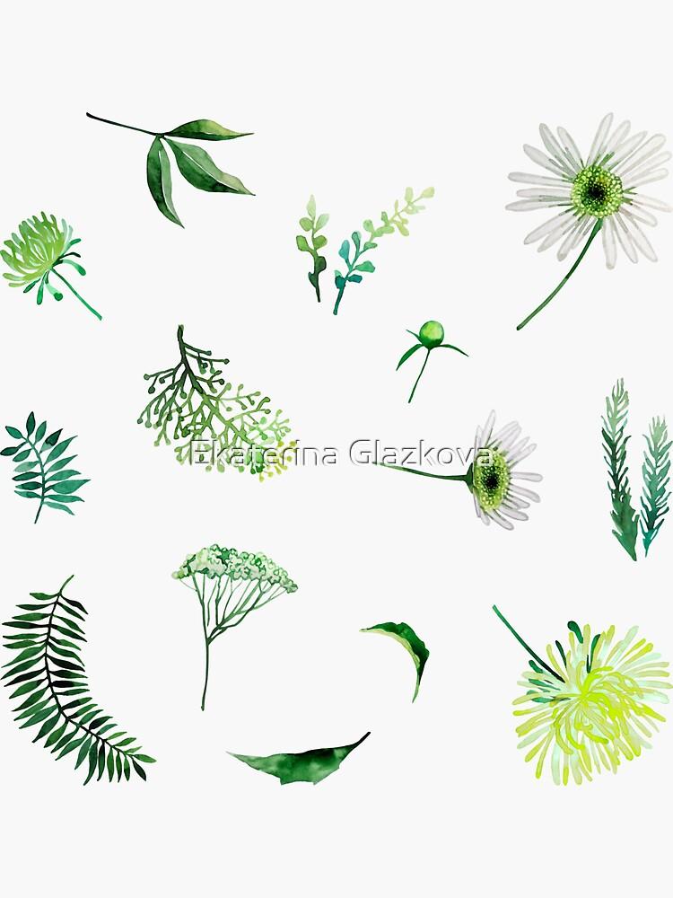 Colección floral acuarela de Glazkova