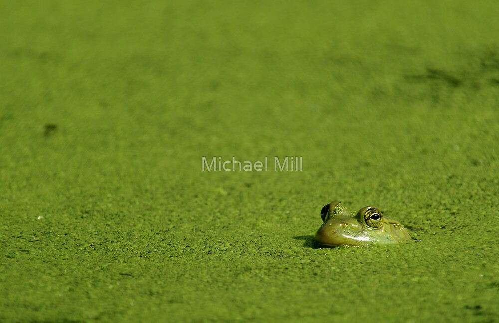 Bullfrog and Algae by Michael Mill