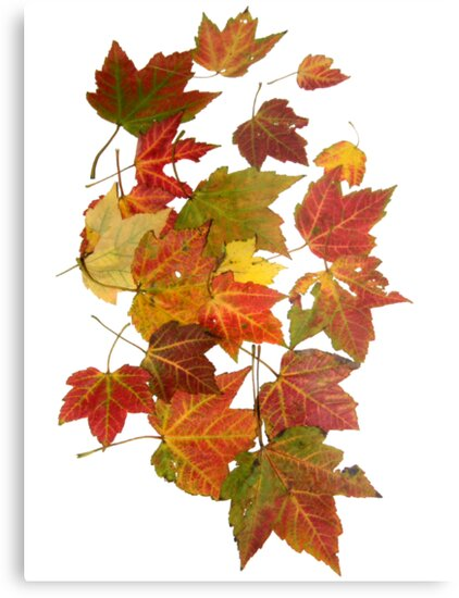 Wall Art Autumn Leaves by Dominic Melfi