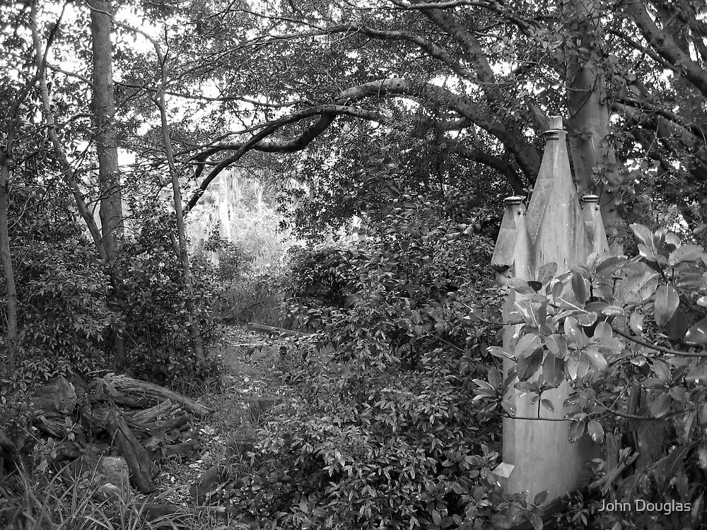 Gore Hill Cemetery, Sydney by John Douglas