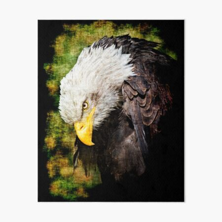 Bald eagle Art Board Print