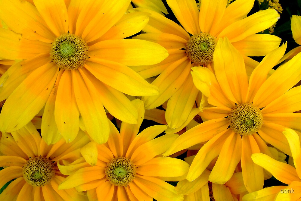 yellow flower by senk