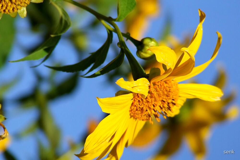 Bau Tong  Flower by senk