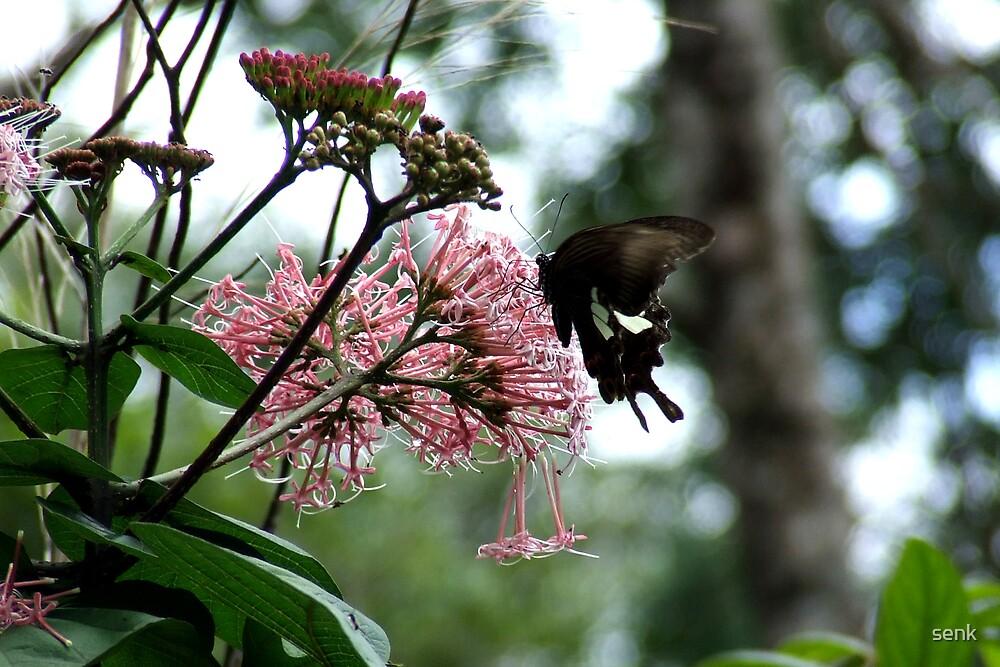 butterfly by senk