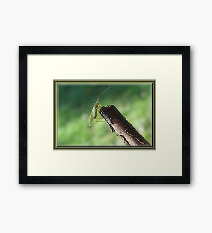 I Just Can`t Shake It! Framed Print