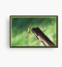 I Just Can`t Shake It! Canvas Print
