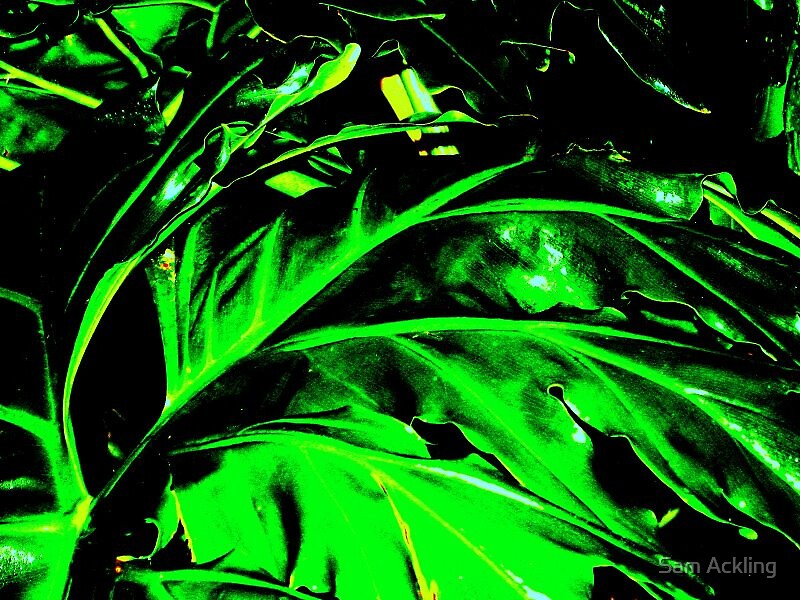 Abstract leaf by Sam Ackling