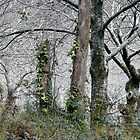 Kinglake trees 2 by eclectic1