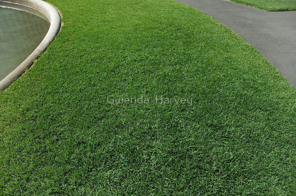 City Grass by Gwenda  Harvey
