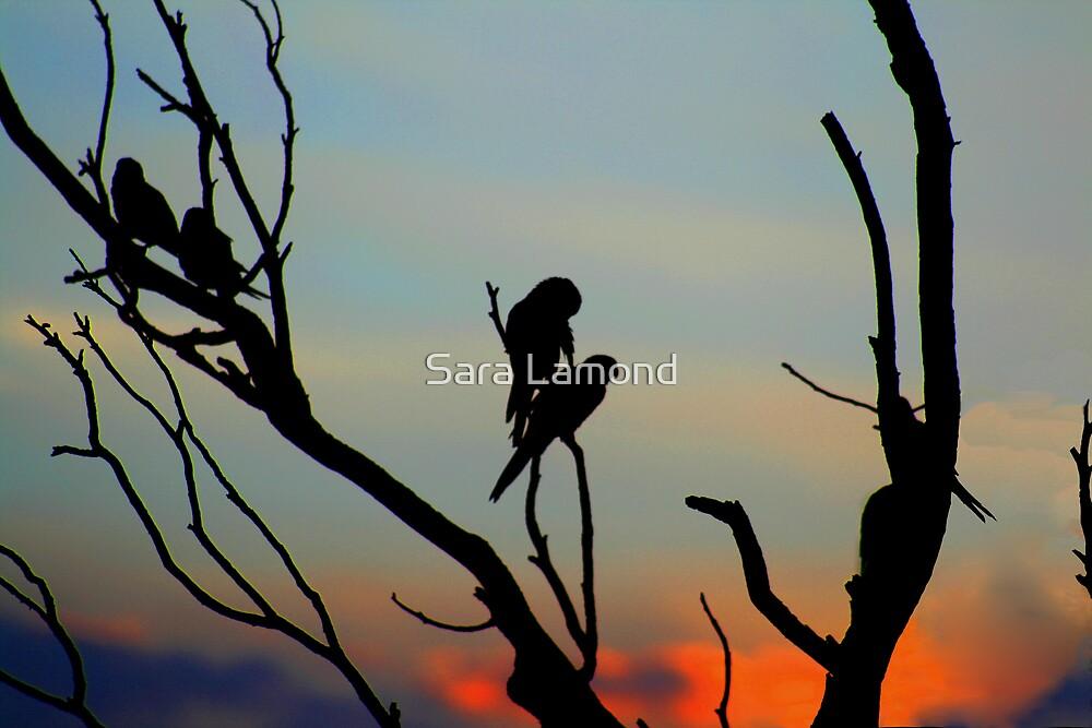 Sunset romance by Sara Lamond