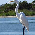 Florida Egret by Mary Kaderabek-Aleckson