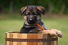 German Shepherd Puppy in Planter by Sandy Keeton
