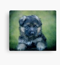 Long Coated German Shepherd Puppy Canvas Print