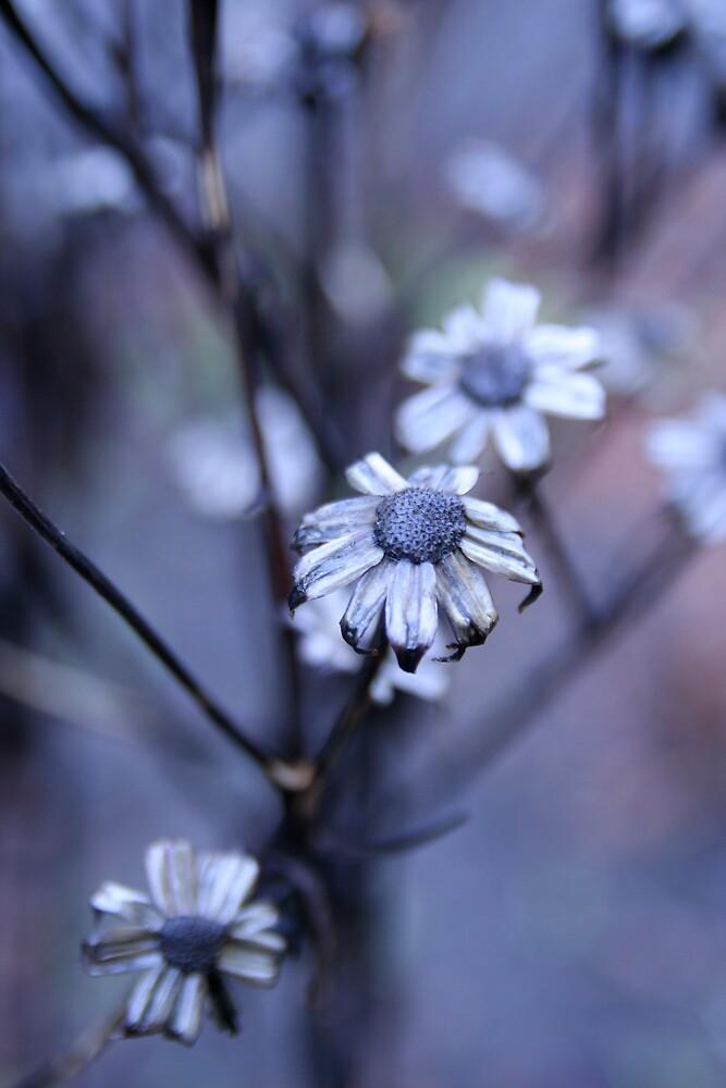 Winterflower by Christian Berven