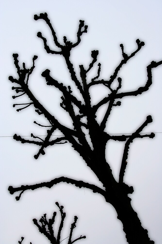tree by Christian Berven