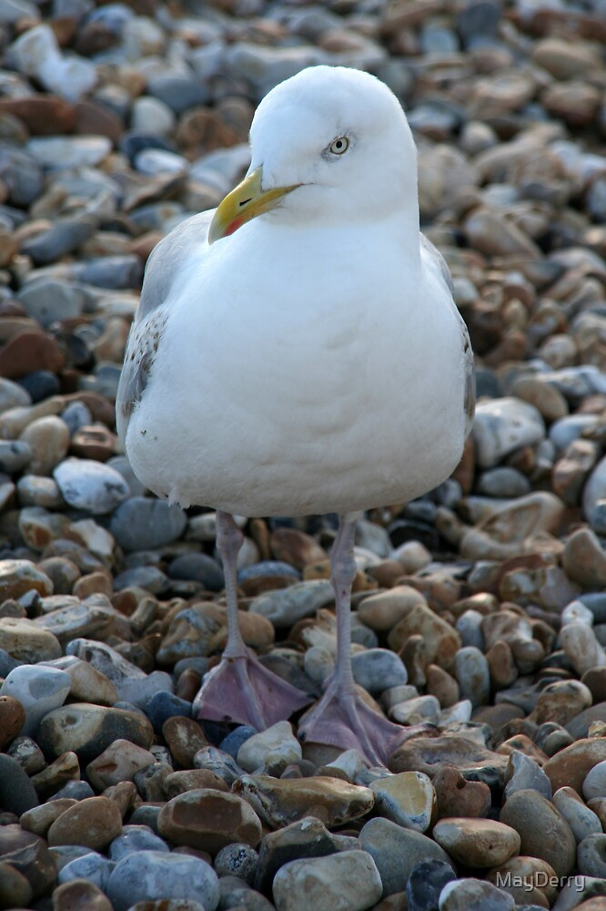 Seagull by MayDerry