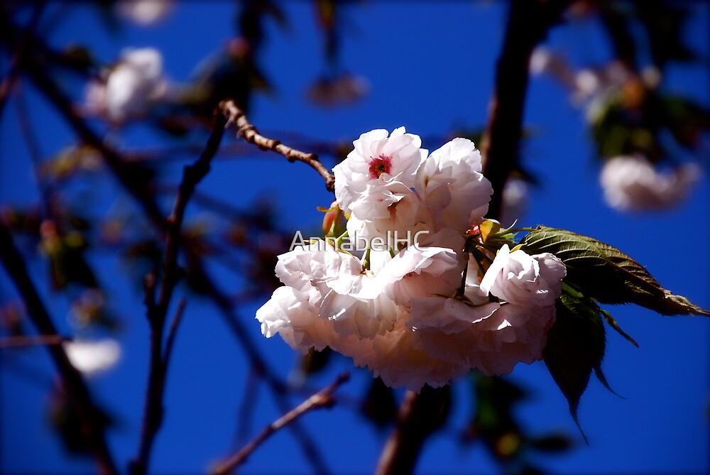 Cherry Blossom by AnnabelHC