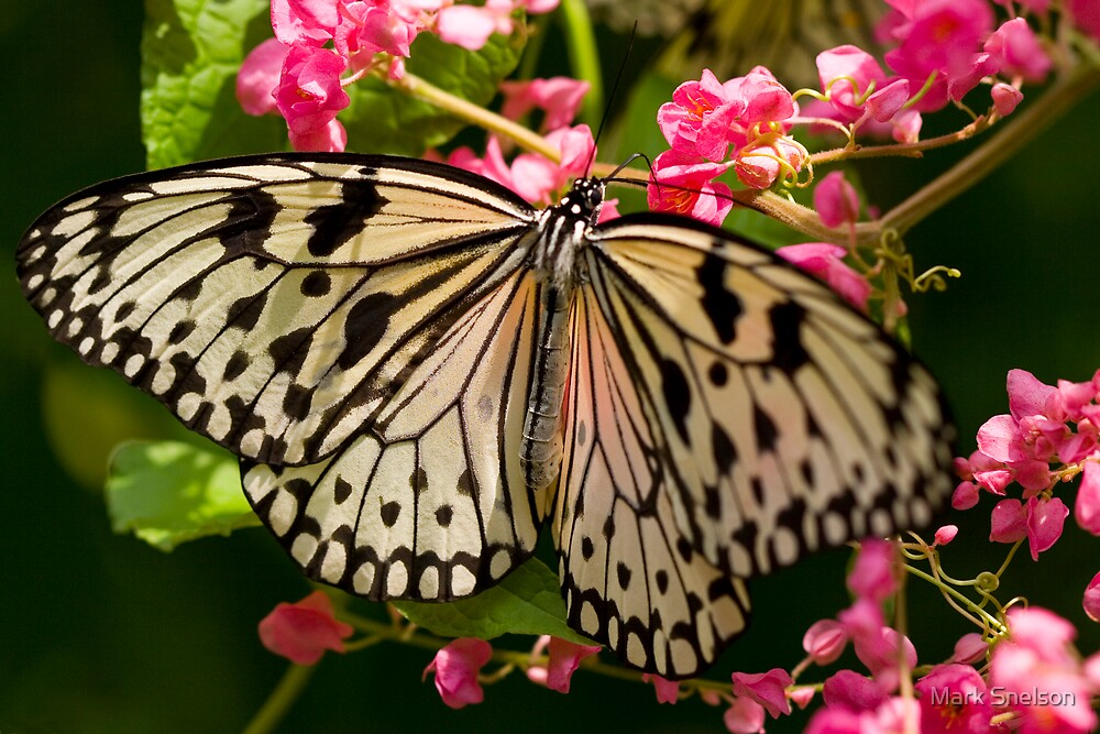 White Butterfly on Pink Flowers by Mark Snelson