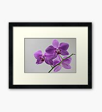 orchid flowers macro shot Framed Print