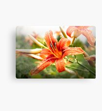 Wet Lily Canvas Print