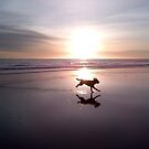 Dog Chasing Sunset in California by Christine  Wilson