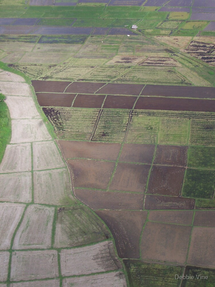 Paddie Fields by Debbie Vine