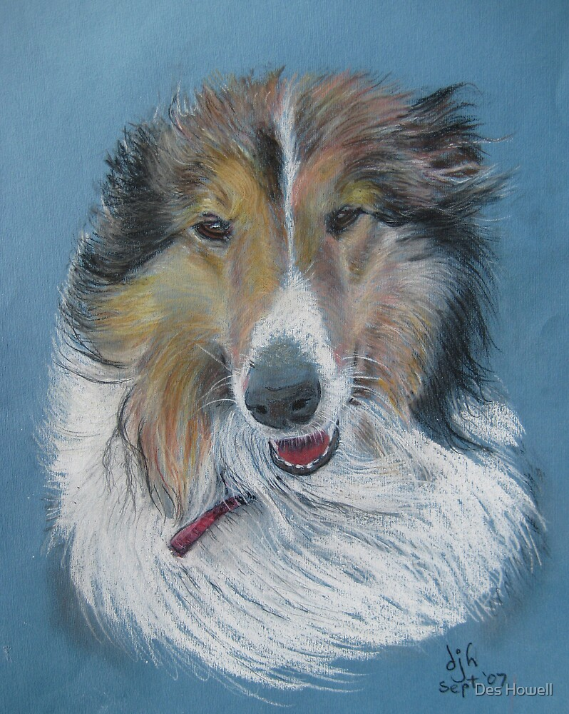Rough Collie by Des Howell