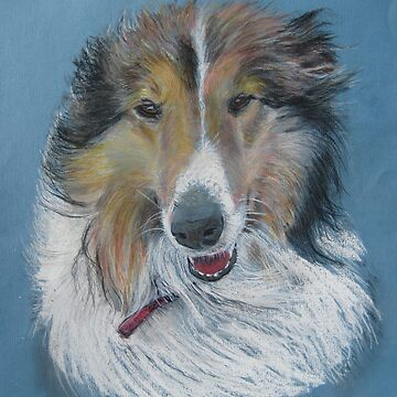 Rough Collie by djharts