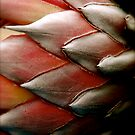 Protea by AnnabelHC