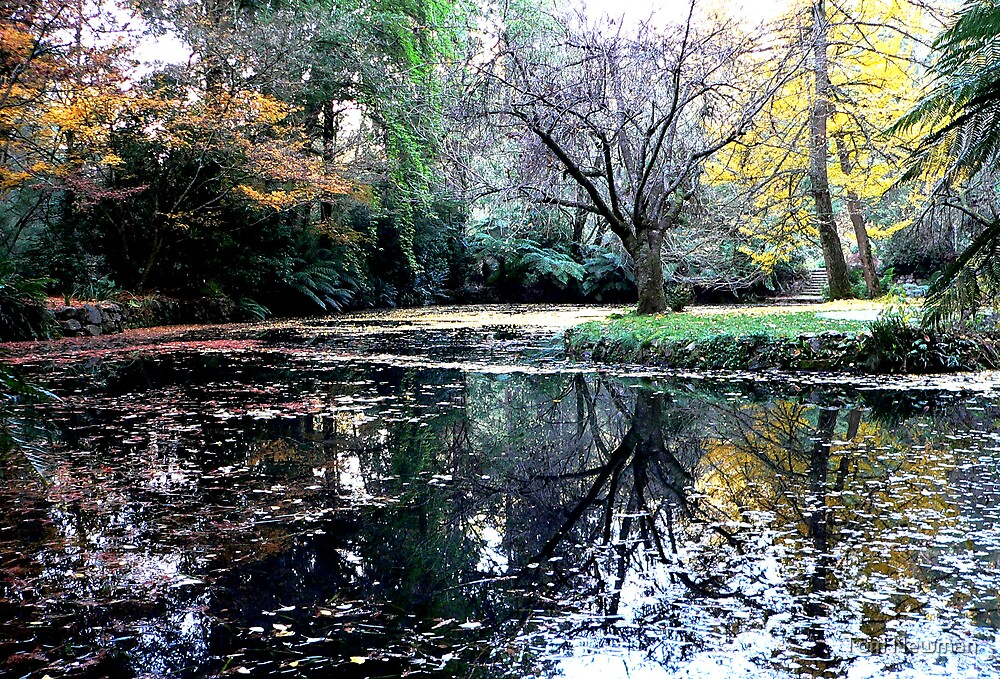 Autumn at Alfred Nicholas Gardens  by Tom Newman