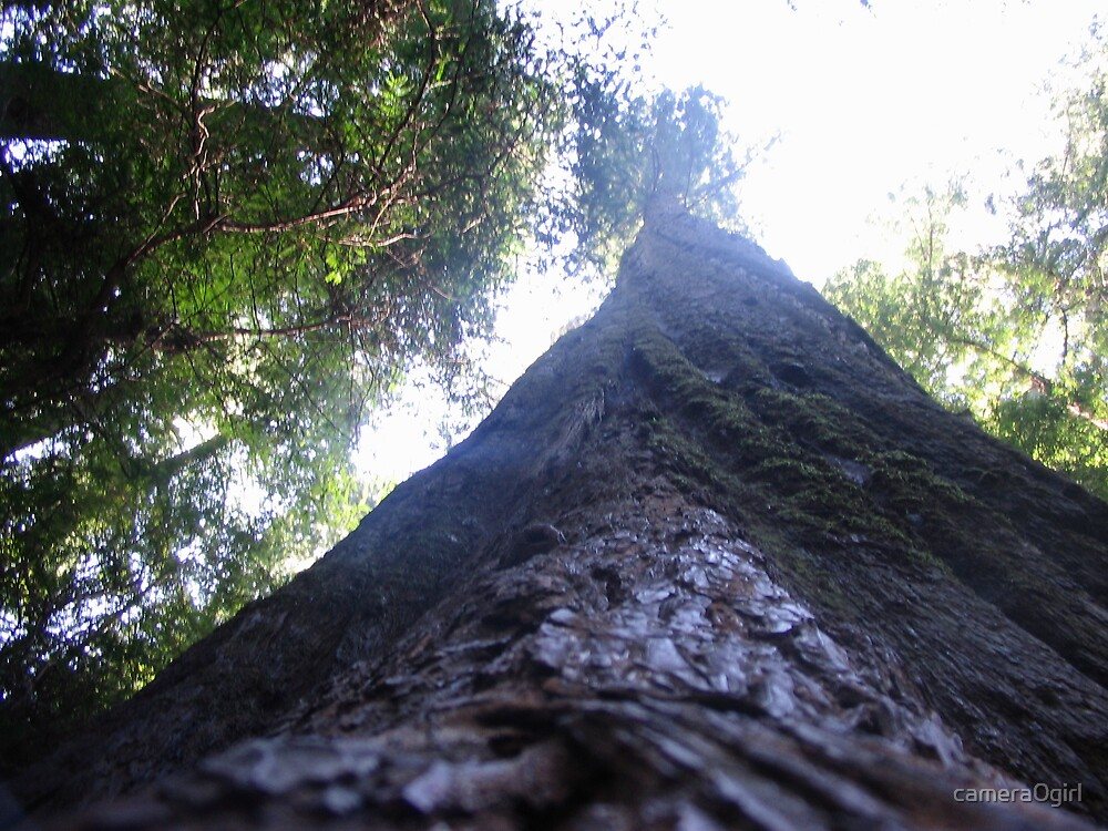 up a tree by camera0girl