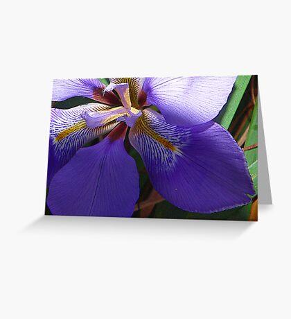 Blue Iris Greeting Card